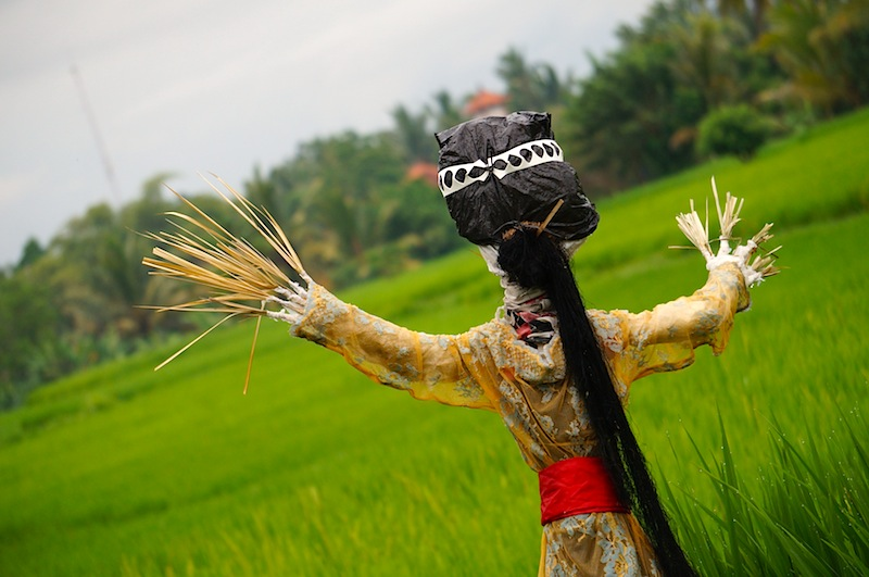 scarecrows in Bali